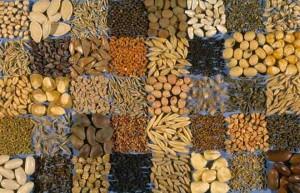 Semintele - Grasimi vegetale