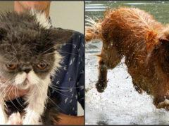 10 fotografii care demonstrează că pisicile și cățeii sunt din lumi diferite