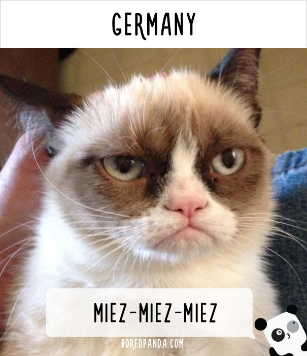 how-people-call-cats-in-germany