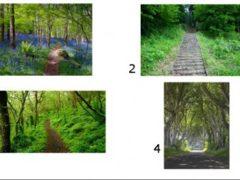 Alege o imagine și află-ți destinul!