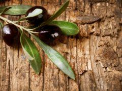 Află mai multe despre frunzele arborelui care face minuni; până și Biblia consemnează aceste proprietăți tămăduitoare!
