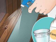 Dacă faci unul din aceste 6 lucruri, nu vei mai vedea niciun păianjen în casa ta!