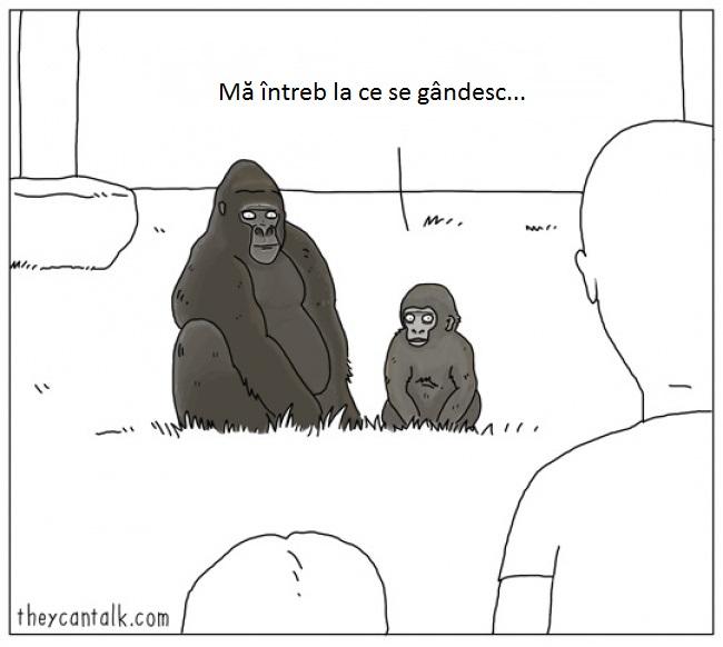 3-1-gorila