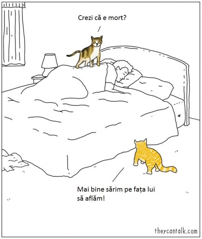7-pisici