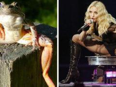 10 animale care se aseamnă cu celebritățile! Imaginile sunt HILARE!