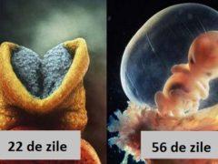 Cum ia naștere un copil: imagini incredibile ale evoluției fătului