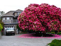 Vezi care sunt cei mai frumoși copaci din lume!